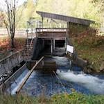 Easy Walking - Little Qualicum River Hatchery