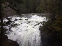 Walking Group - Englishman River Falls