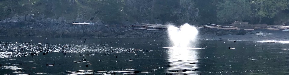 Grey Whale Seen in Nanoose